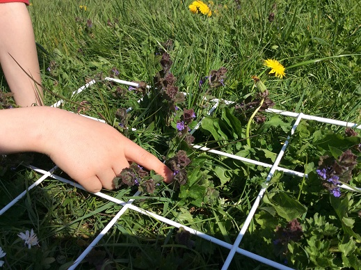 Developing scientific enquiry. A vegetation survey – random sampling using a quadrat to compare two different habitats.