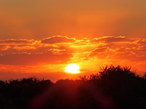 Experience of awe - New Forest sunset