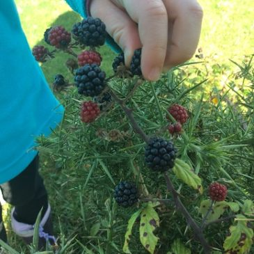 Brambles and blackberries