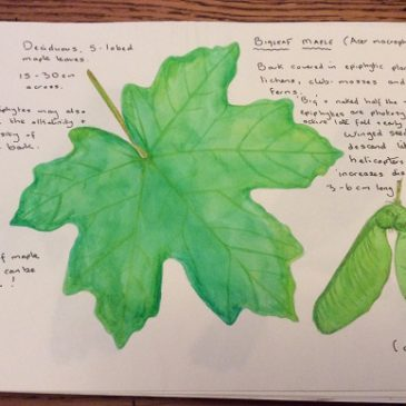 Drawing from nature – nature journals