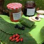 New Forest Autumn Wild Foods event