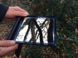 Use a mirror to discover how a tree might look to a bird