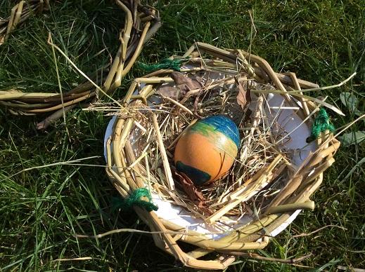 Willow bird nest