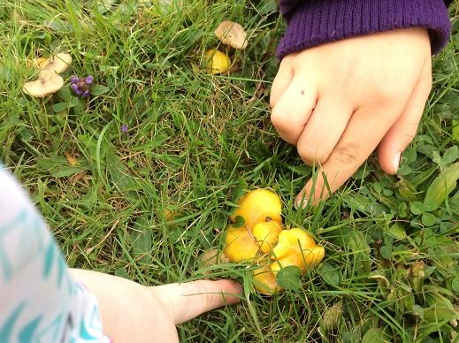 Fabulous fungi