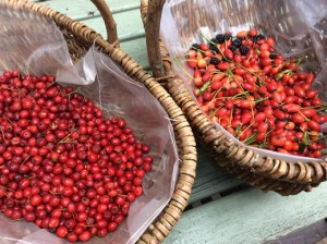 Good foraging reminds us we are part of nature