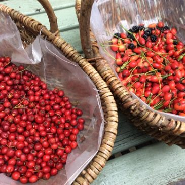 Wild Foods of the Forest – the good forager