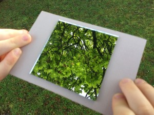 Frame a leaf in a leaf viewer