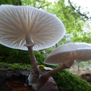 Fungi through a lens