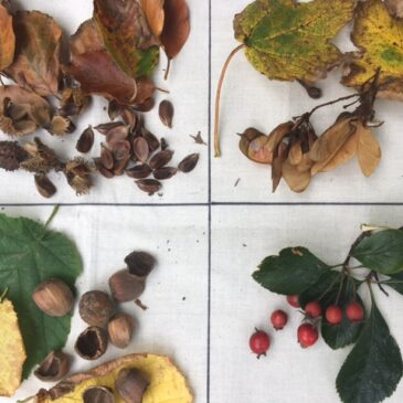 Autumn Nature Detectives